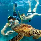snorkel-couple-turtle