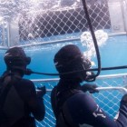 shark-cage-diving03
